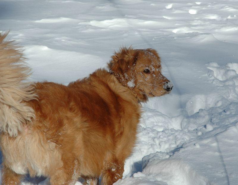 2011 January Snowstorm 068